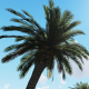 Palm Trees in Daylight - VideoHive Item for Sale