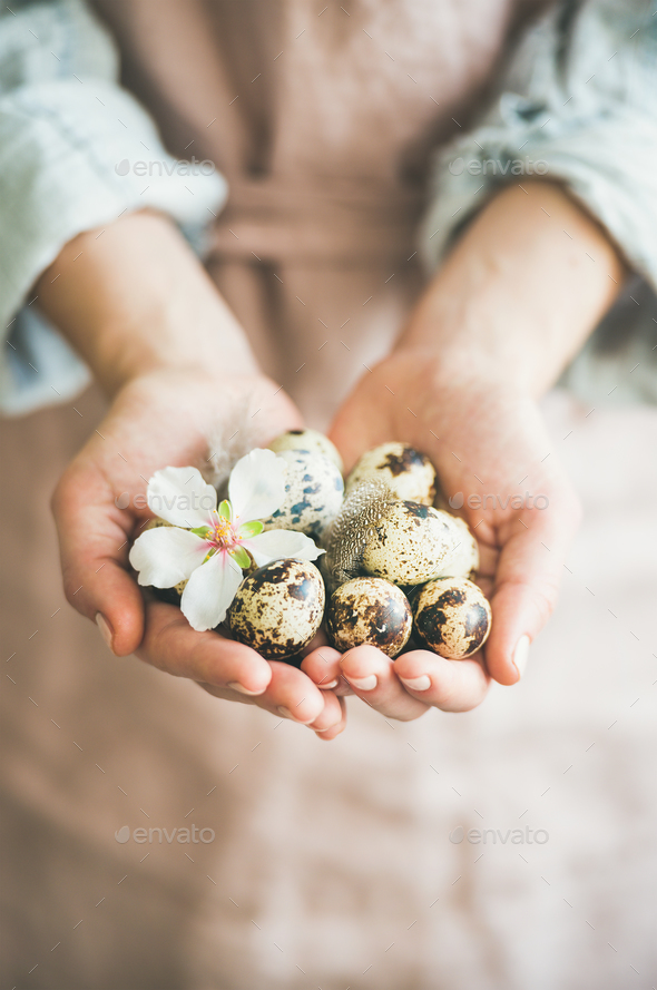 Quail eggs in hands of woman for Easter - Stock Photo - Images
