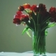 A Beautiful Big Bunch of Tulips Are in the Vase - VideoHive Item for Sale