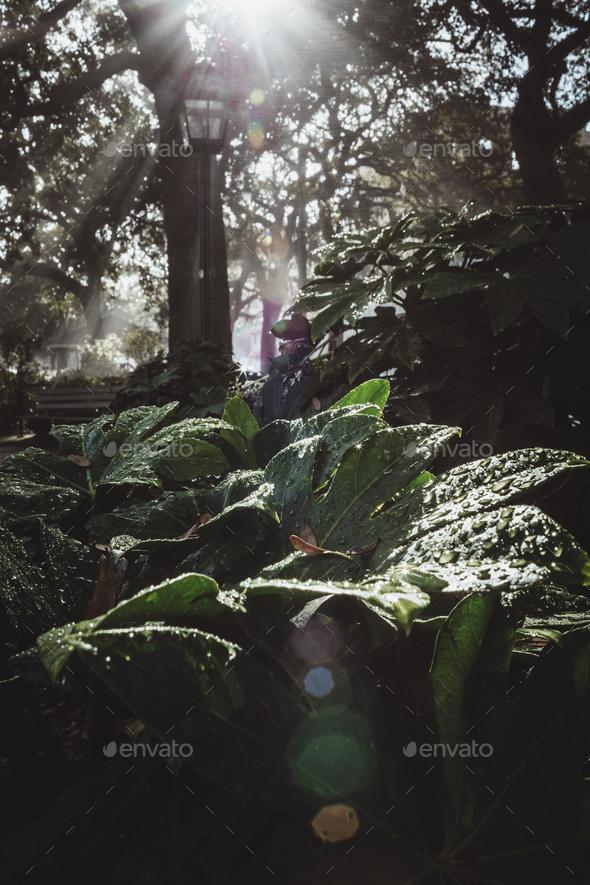 Sunshine on wet plant - Stock Photo - Images
