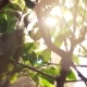 Sun Shining Through the Tree Branches During Watering - VideoHive Item for Sale