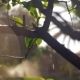 Wet Tree with Falling Water Drops and Sun Specks - VideoHive Item for Sale