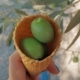 Green Olives in Waffle Cone - VideoHive Item for Sale