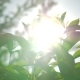 Sunshine Through the Young Trees - VideoHive Item for Sale
