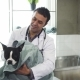 Cheerful Mature Male Vet Drying Cute Dog After Washing at the Clinic - VideoHive Item for Sale