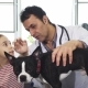 Professional Mature Vet Examining Dog of a Little Girl at the Clinic - VideoHive Item for Sale