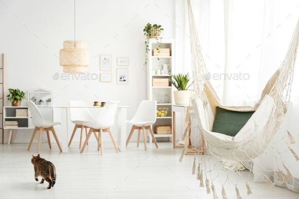 Hammock and cat in room - Stock Photo - Images