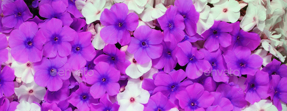 flower close up - Stock Photo - Images