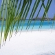 Tropical Travel Destination with Water Bungalows Through Palm Tree Leaves at Maldivian Island - VideoHive Item for Sale