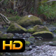 Creek in the Rainforest - VideoHive Item for Sale