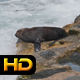 Seal at the Sea - VideoHive Item for Sale