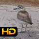 Seagull on the Beach - VideoHive Item for Sale