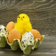 Easter decoration with chicken and eggs - PhotoDune Item for Sale