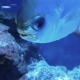 Interesting Footage of a Tropical Fish - VideoHive Item for Sale