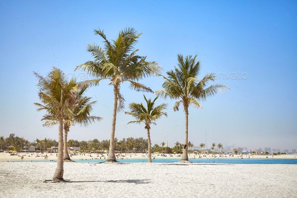 Beautiful beach with coconut palm trees. - Stock Photo - Images