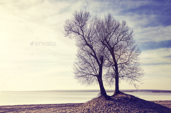 Twin trees on a river bank at sunset. - Stock Photo - Images