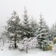 Winter Carpathian Landscape, Christmas Trees in the Snow - VideoHive Item for Sale