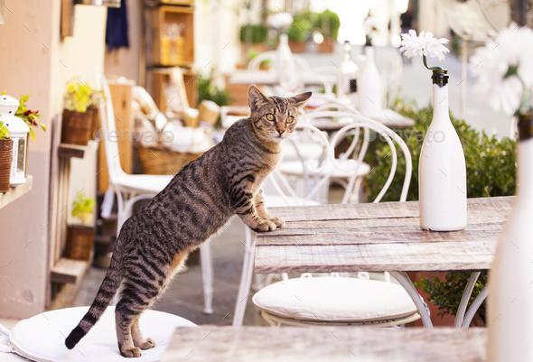 Tuscany cat - Stock Photo - Images