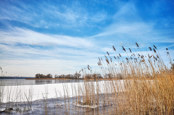 Winter landscape with dry reed by a frozen lake. - Stock Photo - Images