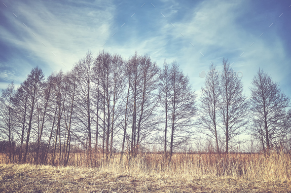 Rural landscape with trees in a row. - Stock Photo - Images