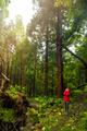 Enjoy the nature - PhotoDune Item for Sale