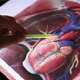 Analyzing Model Of Human Circulatory System On Touch Screen Computer - VideoHive Item for Sale