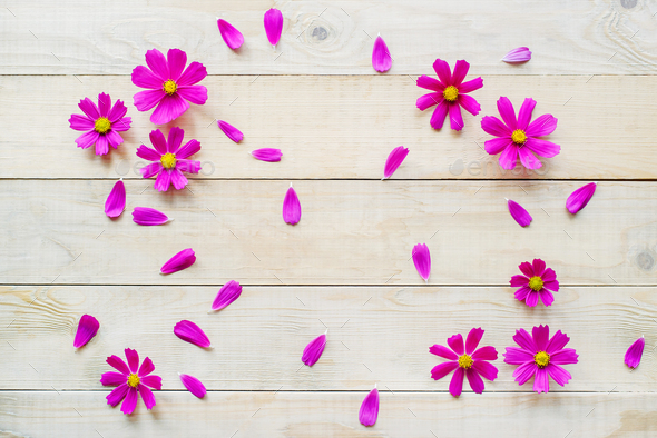 frame of cosmos flowers and petals - Stock Photo - Images