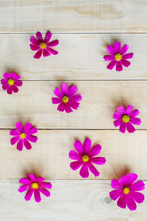 pattern of cosmos flowers - Stock Photo - Images