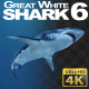 Shark 6 - VideoHive Item for Sale