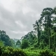 Misty Rainforest - VideoHive Item for Sale