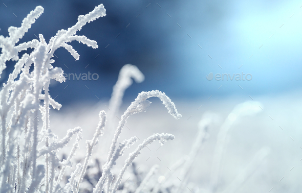 Frozen grass - Stock Photo - Images
