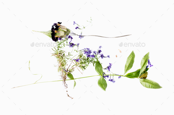 Dried wildflowers. - Stock Photo - Images