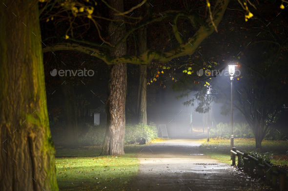 Foggy Autumn Night In A Park - Stock Photo - Images