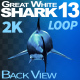Shark 13 Back View - VideoHive Item for Sale