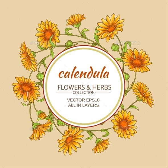 Calendula Vector Frame - Health/Medicine Conceptual