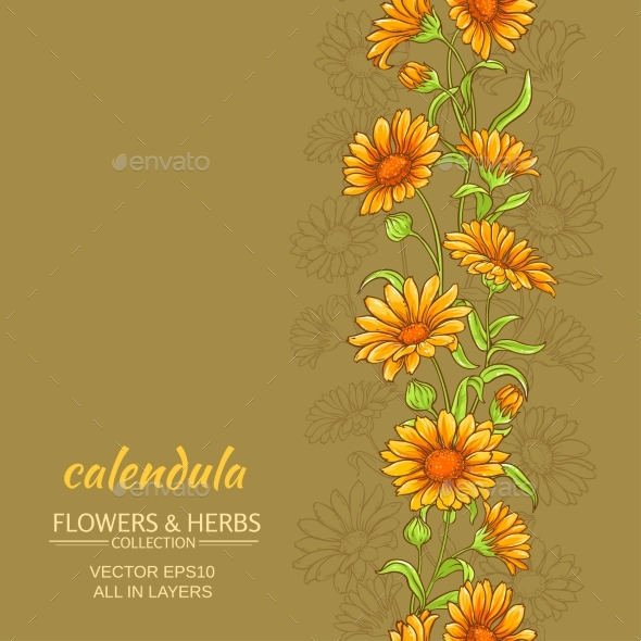 Calendula Vector Background - Flowers & Plants Nature