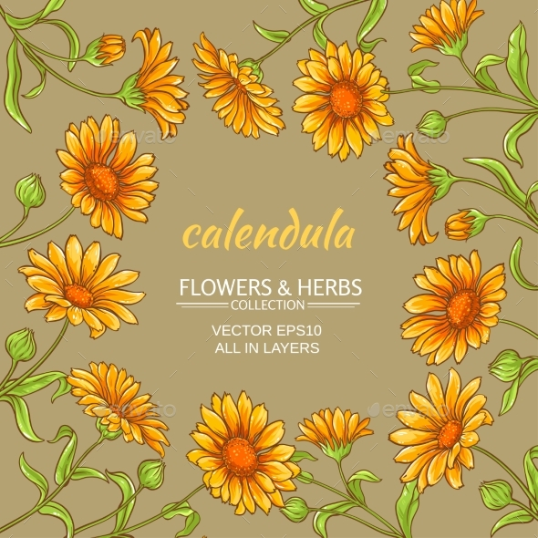 Calendula Vector Frame - Flowers & Plants Nature