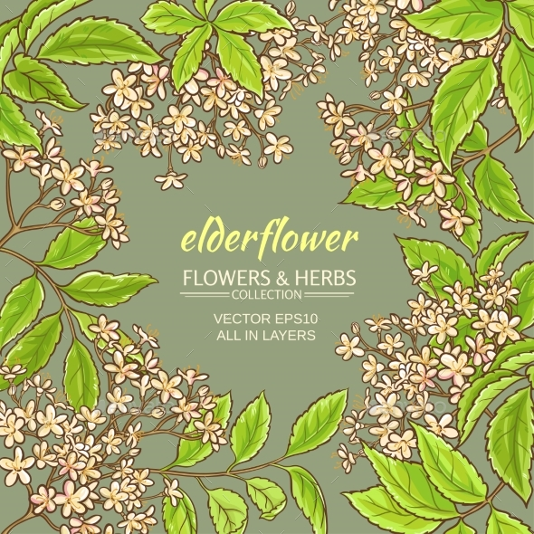 Elderflower Vector Frame - Health/Medicine Conceptual