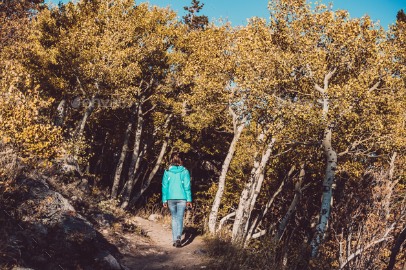 Tourist in aspen grove at autumn - Stock Photo - Images