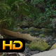 Small Stream in Rainforest - VideoHive Item for Sale