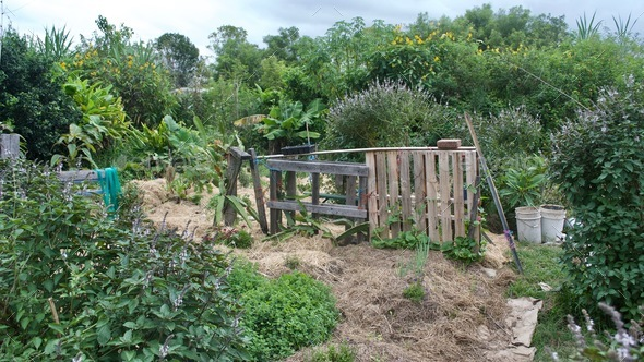Permaculture Allotment - Stock Photo - Images