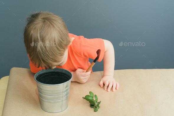 Child plants a crassula ovata plant - Stock Photo - Images