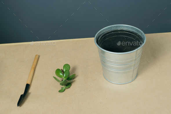 shovel, money tree sprout and empty pot on kraft paper - Stock Photo - Images