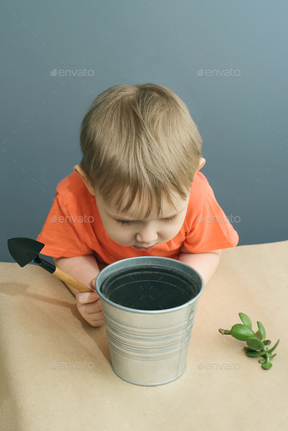 Child plants a crassula ovata plant - Stock Photo - Images