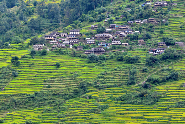 Mountain village and rice fields in the Himalayas, Nepal - Stock Photo - Images