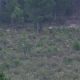 Two Male Deers with Huge Antler Walking Into the Bush - VideoHive Item for Sale