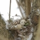 A Nest Filled with Three Bird Eggs in the Branches of a Tree Winter - VideoHive Item for Sale