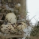 Bird Nest on Tree Branch with Three Frozen Eggs Inside, Winter. - VideoHive Item for Sale
