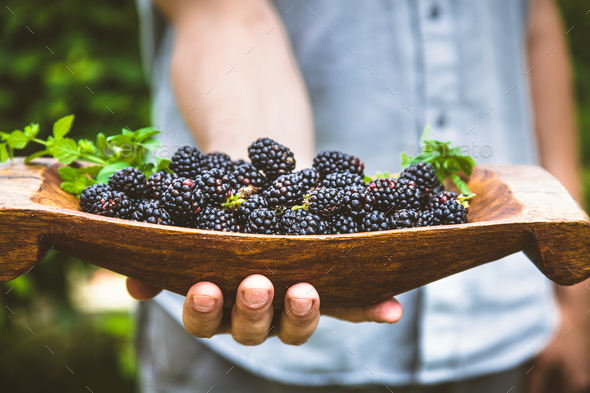 Blackberries - Stock Photo - Images