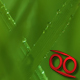 Wheat Grass  - VideoHive Item for Sale